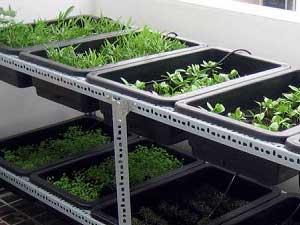 Làm giá kệ v lỗ trồng rau sạch tại TPHCM tận nhà