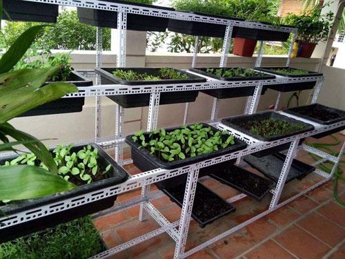 Lắp đặt giá kệ V lỗ trồng rau sạch tại TP.HCM